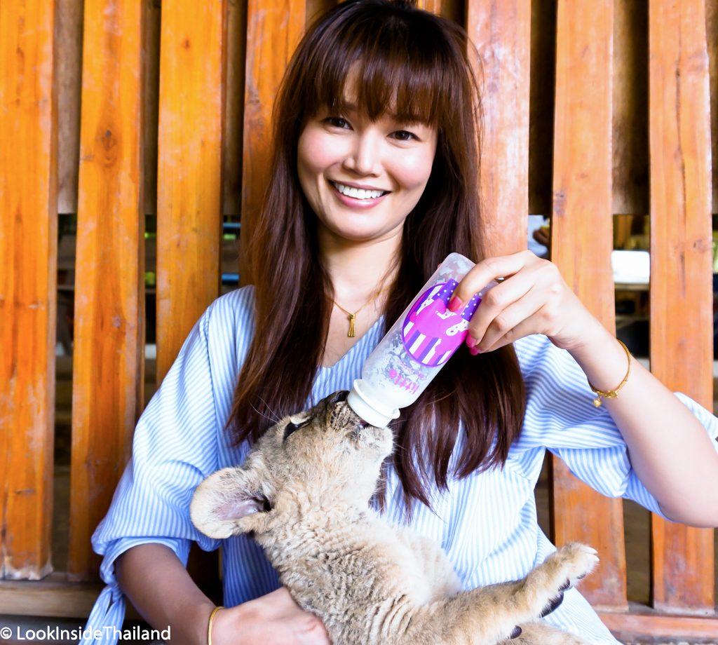 Namfon feeding baby lioness